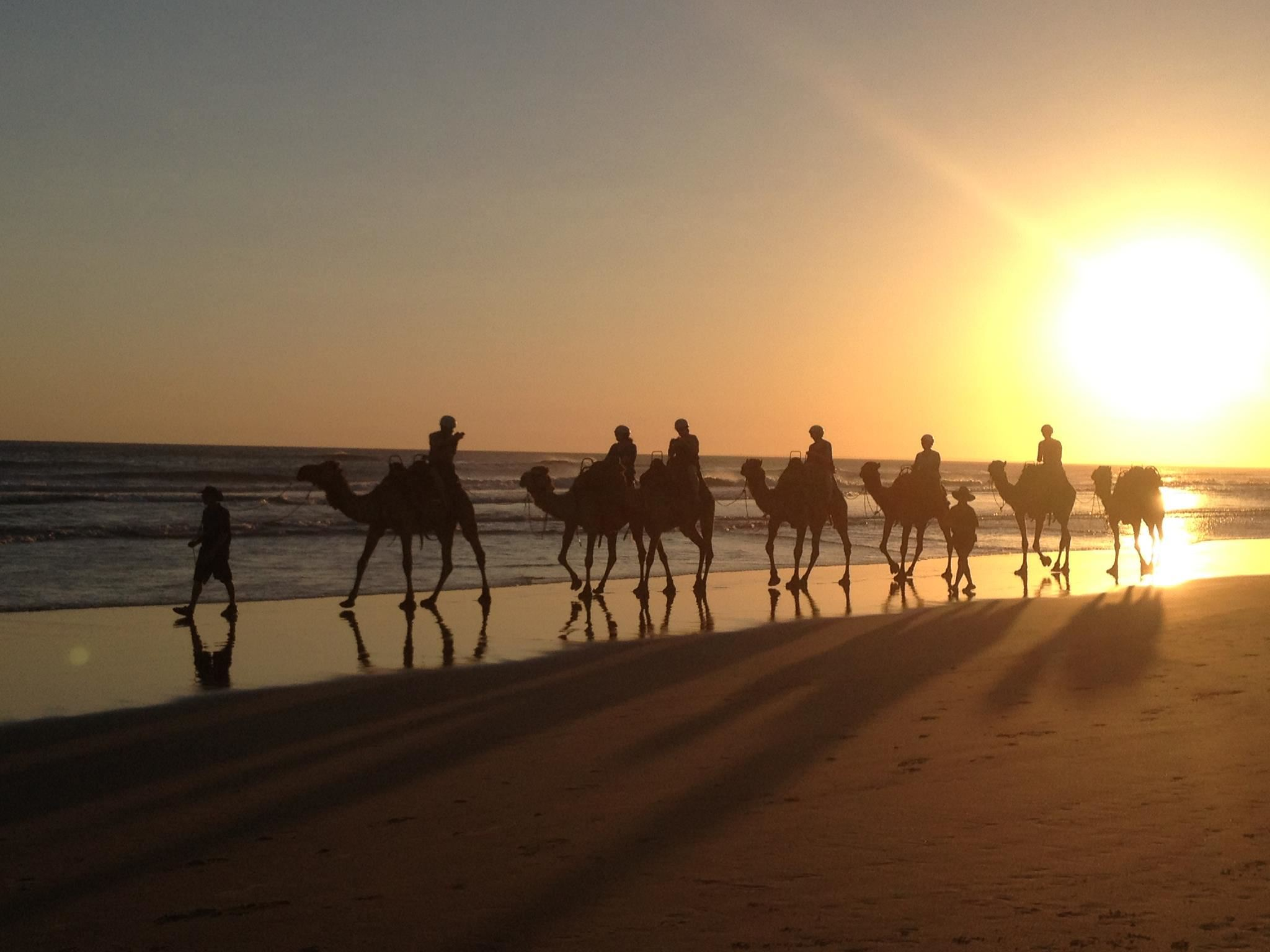 Camels on Stockton Beach, Anna Bay