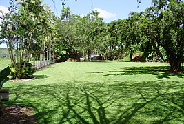 Daintree Riverview Lodges and Van Park - Daintree Forest photo 5