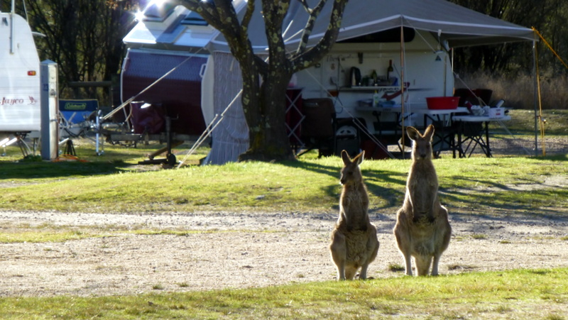 Country Style Caravan Park - Stanthorpe photo 7