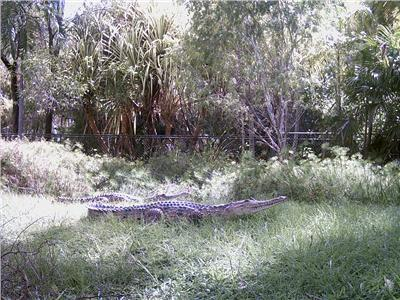 Tumbling Waters Holiday Park - Berry Springs photo 5