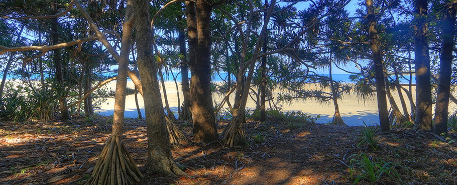 Cape Hillsborough Nature Tourist Park - Cape Hillsborough photo 5