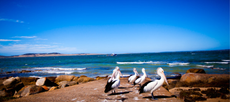 Port Lincoln Tourist Park - Port Lincoln photo 5