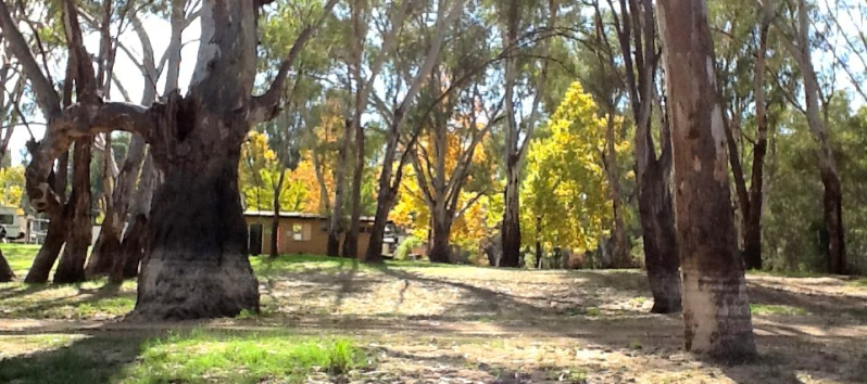 Darlington Point Riverside Caravan Park - Darlington Point photo 4