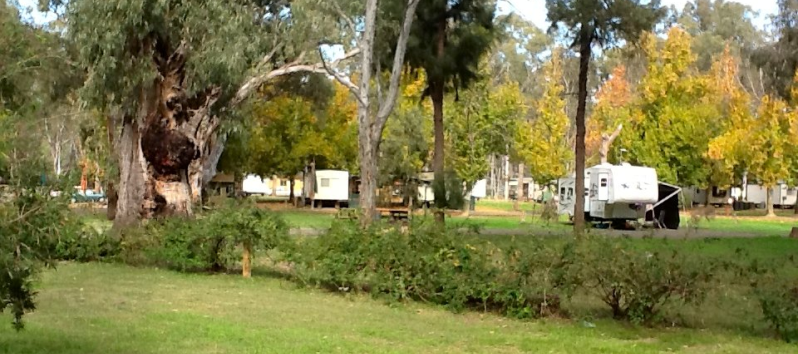 Darlington Point Riverside Caravan Park - Darlington Point photo 9