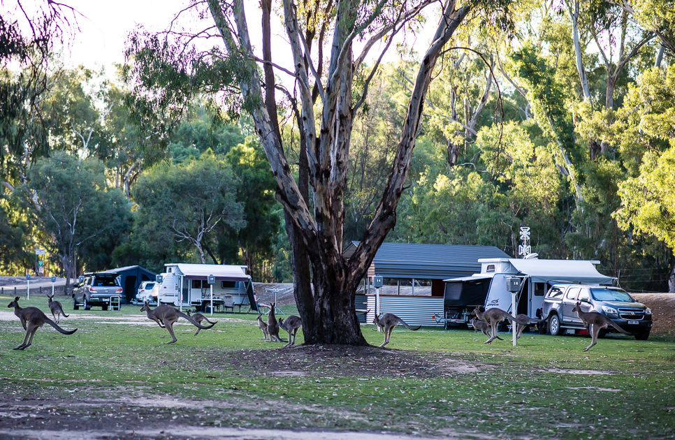 Time Out Holiday Park - Koonoomoo photo 25